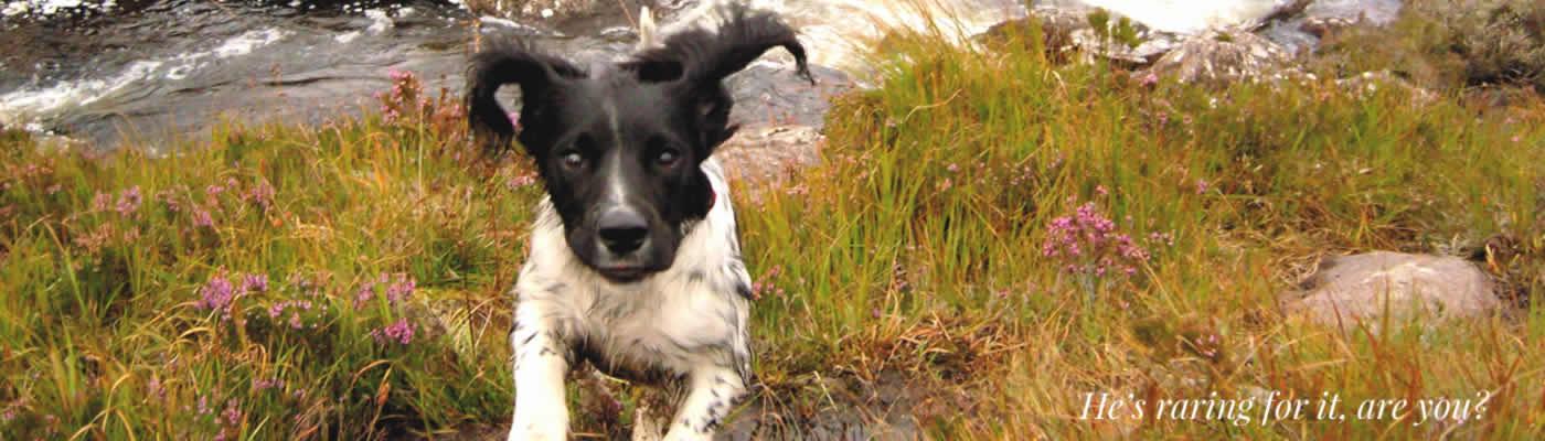 8 Day Pet Friendly Scotland Car Tour